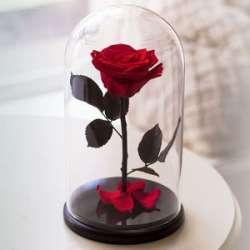 Роза в колбе. Премиум. Красная