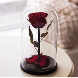 Роза в колбе. Премиум. Бордовая